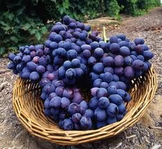 A basket of blue grapes....