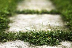 Unkraut in Fugen kann auch ohne Chemikalien dauerhaft entfernt werden. (Diy Garden Balcony)