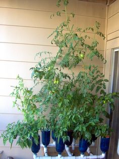 Hydroponic Garden using PVC... Soil-Less gardening