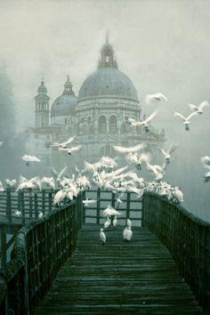 Santa Maria della Salute in Venice. Parce que j'irai quand je n'aurai plus peur des oiseaux...