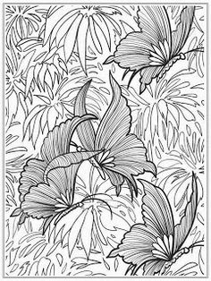 Adults Color Pages Free Printable Butterflies Templates Print Butterfly Coloring For 49 Your Book With