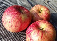 Malus 'Gravenstein' - Gravenstein Apple