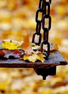 Falling leaves & an old swing.fall is in the air! Autumn Day, Hello Autumn, Autumn Leaves, Winter, Autumn Scenery, Seasons Of The Year, Happy Fall Y'all, Yellow And Brown, Autumn Inspiration