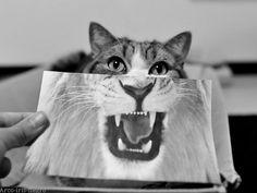 Uma questão de perspectiva #cat #lion #justthewayyoulook