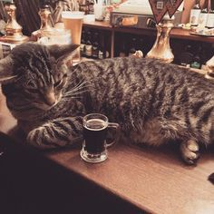 If you're a fan of good beer and the company of cats and happen to find yourself in the UK, be sure to pop by The Bag Of Nails.