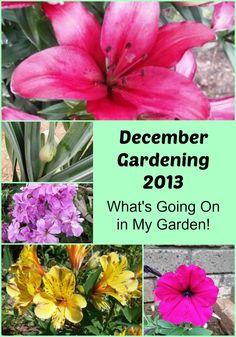 December Gardening 2013 - What's Happening in the Garden! - The Links Site
