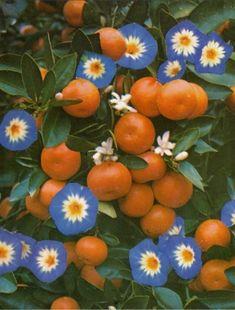Orange and purple color inspiration
