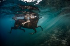 A Weightless Ride - Underwater photo of running horse © Will Falcon My social contacts: VK: http://vk.com/vitaly_sokol FaceBook: http://www.facebook.com/VitalySokol LJ: http://vitaly-sokol.livejournal.com/ Thank you for your opinion
