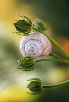 Nice to meet you. Drone Photography, Animal Photography, Nature Photography, Foto Macro, Snail Shell, Happy Paintings, Tier Fotos, Fauna, Nice To Meet