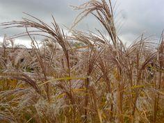 Autumn in Edinburgh Botanics