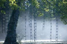 French artist François Mechain's L'arbre aux échelles was an outdoor art installation featuring many ladders adorning the branches of trees in a park near Nice, France.