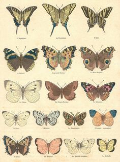 moths or butterflies high res Photo Wall Collage, Picture Wall, Collage Art, Botanical Drawings, Botanical Illustration, Animes Wallpapers, Cute Wallpapers, Photo Deco, Hippie Art