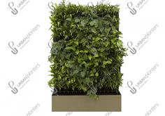 A living wall on the move! Our floor-standing mobile systems can be flexible to your needs and used to create single or multi-sided, healthy green screens and partitions. Urban Planters, Mobile Living, Living Walls, Green Walls, Dots, Herbs, Backyard, Stitches, Patio