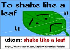 Idiom: To shake like a leaf - to shake a lot because you are nervous or frightened OR to be very nervous or frightened - (Then the leaf-shaking part would just be hyperbole!)