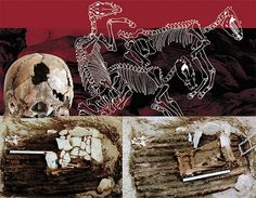 Above the first human burial in Tumulus 1 of the Ak-Alakha 3 site was the burial of horses. Sketch by E. Shumakova. On the ceiling of the vault with the mummy of a high-born woman there was another burial chamber with two dead people, made of blocks covered with slabs of stone (left). The back of the skull of one of the dead showed traces of a blow that must have caused his/her death (below). This grave had been violated by ancient robbers. Photo by V. Mylnikov. The photo of the skull by M…