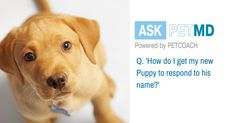 s your dog having trouble identifying with his new name?  #AskPETMD  Have a question only a veterinarian can answer? Find your answer below: