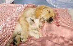 This sleepy pair.