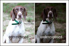 Photography 101: Exposure