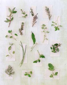 Coleccion de Hojas de algunas Hierbas....Herbs