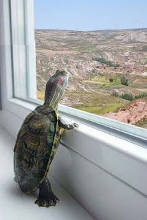 WHAT IS OUT THERE?