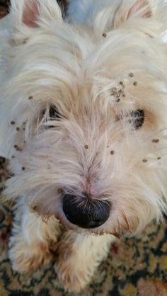 Bobble dog