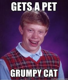 Bad luck Brian meme - gets a pet grumpy cat