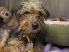 Adopt a Pet! - Humane Society of Missouri - http://www.hsmo.org