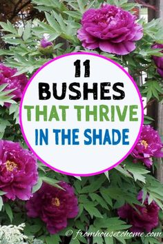 This list of shrubs is perfect for my shade garden. I wasn't sure how to fill in the garden bed and now I have a bunch of different bushes that will work in my backyard garden design. I really like the 4th one. #fromhousetohome #shrubs #gardenideas #shadegarden #shadelovingshrubs #shadeplants Shade Garden Plants, Garden Trees, Garden Bed, Garden Shrubs, Part Shade Plants, Ground Cover Plants Shade, Garden Ideas Under Trees, Planters For Shade, Plants That Like Shade