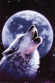 Lupo sotto la luna piena