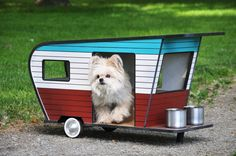 8 Dogs Getting in on the Tiny Houses Trend | Rover Blog