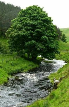 Country Life, Country Roads, River, Outdoor, Paintings, Sweet, Google, Scenery, Outdoors