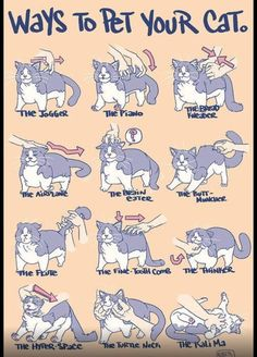 Ways to Pet your Cat.