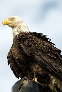 Bald Eagle Poses For Selfie With Brothers After Rescue