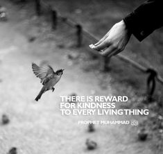 Beautiful Islamic Quotes About Life - Images