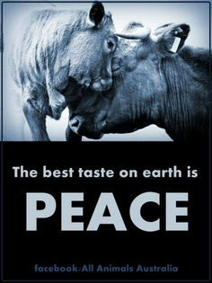 why vegan? the best taste on earth is peace -- why finance animal cruelty Vegan Facts, Vegan Memes, Vegan Quotes, Vegetarian Quotes, Vegan Humor, Parrot Facts, Amor Animal, Why Vegan, Stop Animal Cruelty