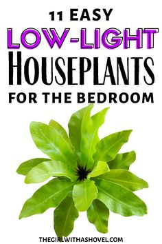 Do you have a dark bedroom?!?! Spice things up with these low light plants for the bedroom! Because even the darkest of spaces can grow the right plants! #plantlove #lowlighthouseplant NOT A LOT OF SUN IN YOUR ROOM? NO WORRIES WITH THESE HOUSEPLANTS! Low Light Houseplants | Indoor Plants for No Sun | Houseplants for Dark Apartments | Indoor Plants for the Bedroom | Pothos Vine, Cast Iron Plant, Low Light Plants, Plant Guide, Bedroom Plants, Snake Plant, Little Plants, Foliage Plants, Hanging Planters