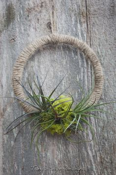 Jute and Tillandsia Wreath by TanyaSlyeDesigns on Etsy, $30.00