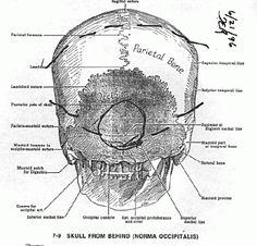 Paul Walker-Roger Rodas autopsies
