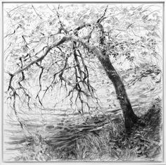 Albrecht Rissler's Drawing Landscape: Drawing with charcoal on canvas Easy Drawings, Pencil Drawings, Charcoal Drawings, Scale Drawings, Sketching Tips, Landscape Drawings, Tree Forest, Drawing Techniques, Botanical Art