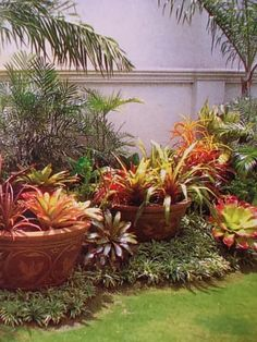 Tropical garden - using pots within landscape. What a pretty Bromeliads :)
