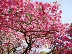 lindas casas cor de rosa imagens - Pesquisa Google