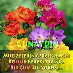 Çiçekli Günaydın Resimleri Ve Günaydın Sözleri | Ozledim.Net Good Morning, Messages, Rose, Flowers, Plants, Emoji, Good Day, Buen Dia, Bonjour