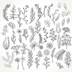 Botanical Line Drawing, Floral Drawing, Flower Design Drawing, Simple Flower Drawing, Simple Drawing Designs, Simple Nature Drawing, Flower Pattern Drawing, Bullet Journal Ideas Pages, Bullet Journal Inspiration