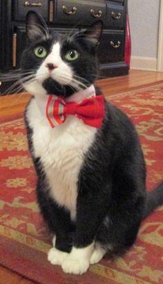 Batman, the Tuxedo Cat