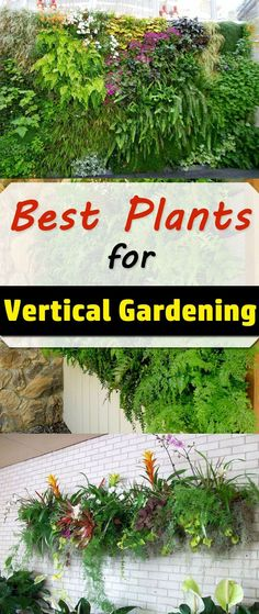 The correct selection of plants plays an important role in the design and functioning of vertical gardens. In this article, we show a selection of the best plants for vertical gardening.
