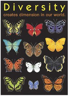 Diversity Creates Dimension In Our World . Poster - Create an inspiring environment and encourage learning and positive character traits with ARGUS Large Posters. With hundreds of value-priced titles, you can display intriguing, new messages often. Diversity Poster, Equality And Diversity, Unity In Diversity, Cultural Diversity, Cultural Competence, Diversity Quotes, We Are The World, Our World, Positive Character Traits