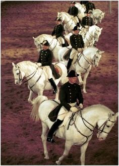 Google Image Result for http://writinghorseback.com/wp-content/uploads/2010/12/Lippizaner-Riders-EquiSearch.JPG