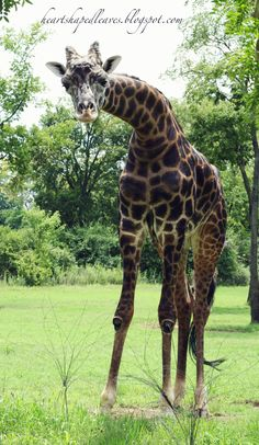 Taken at the Nashville Zoo at Grassmere.
