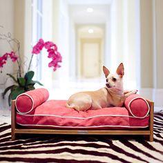 Pet Lounge Studios: Beds & Bowls For Pampered Pets
