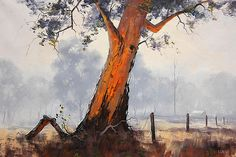 Graham Gercken - Australian Eucalyptus Tree